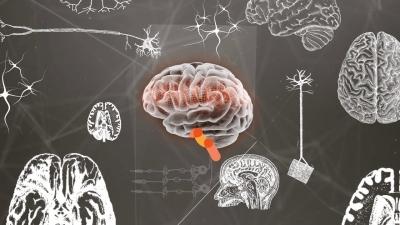 """Simposio Fundación del Cerebro """"Neurología y Sociedad"""""""